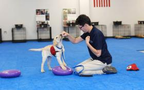 trains dogs to search and rescue, sniff out indicators of disease