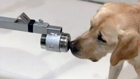 Photo of a dog sniffing electronic equipment as part of the Penn Vet Working Dog Center's research