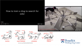 Penn Vet Working Dog Center takes canine handler academy virtual