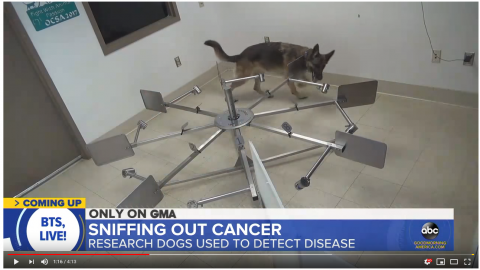 working dog training to detect cancer