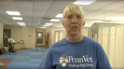 Woman in a Penn Vet Shirt